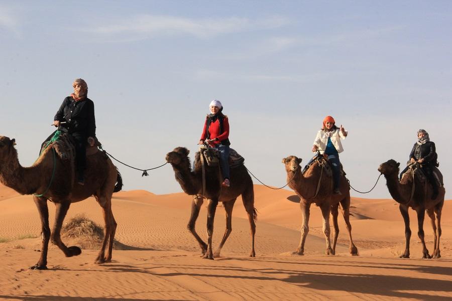 -camellos-desierto-Marruecos